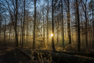 ©Bernd Kasper  / pixelio.de