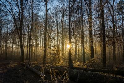 Wald Abendlicht